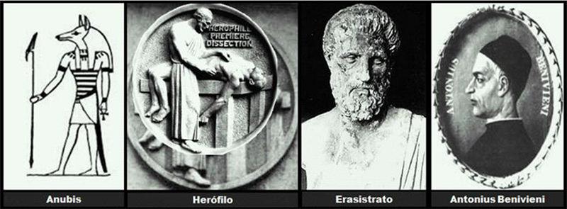 Del Sepulchretum a la molécula. Concisa Historia de la Anatomía ...